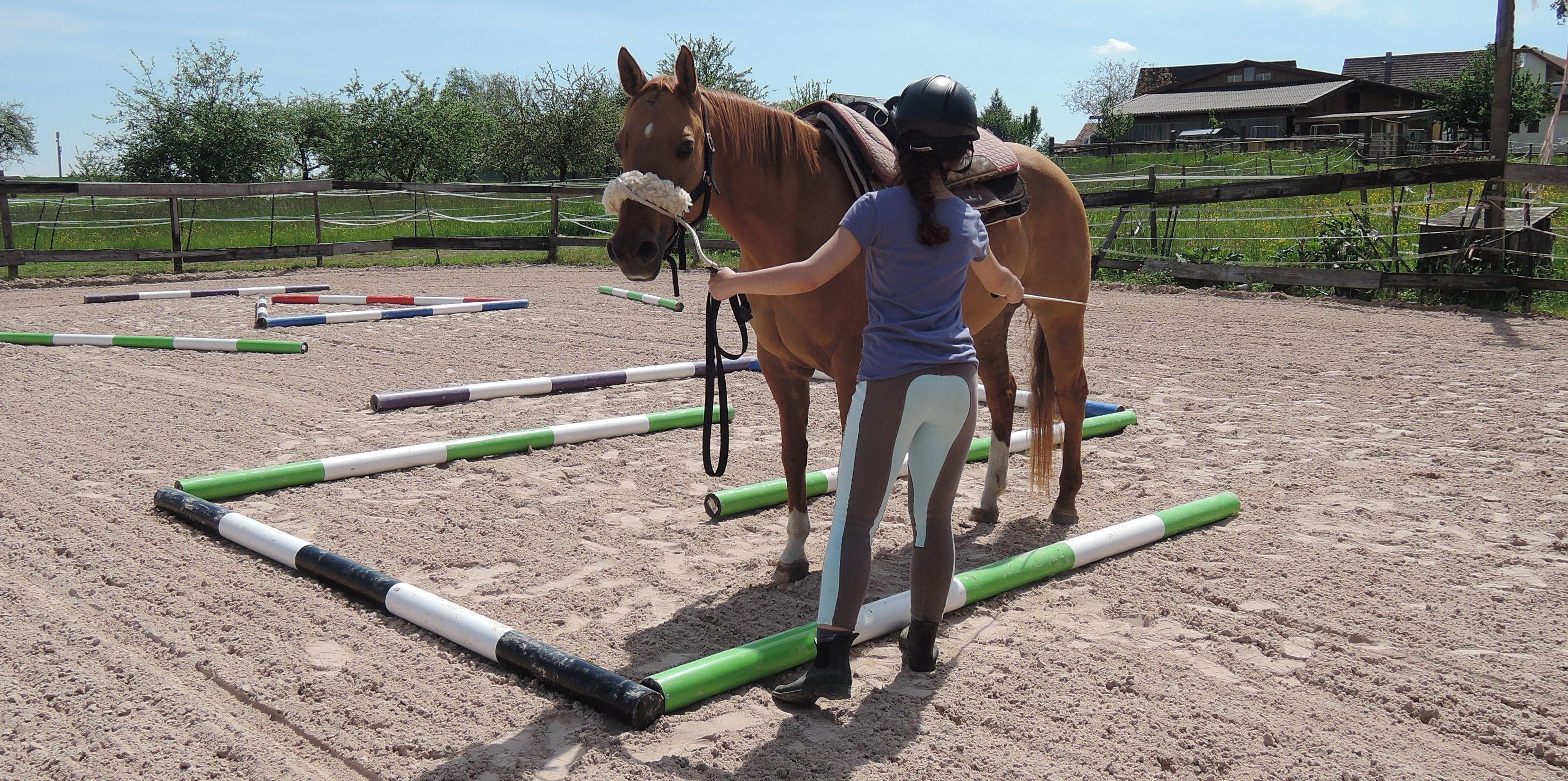 Ferienprogramm: Pferdeflüstern