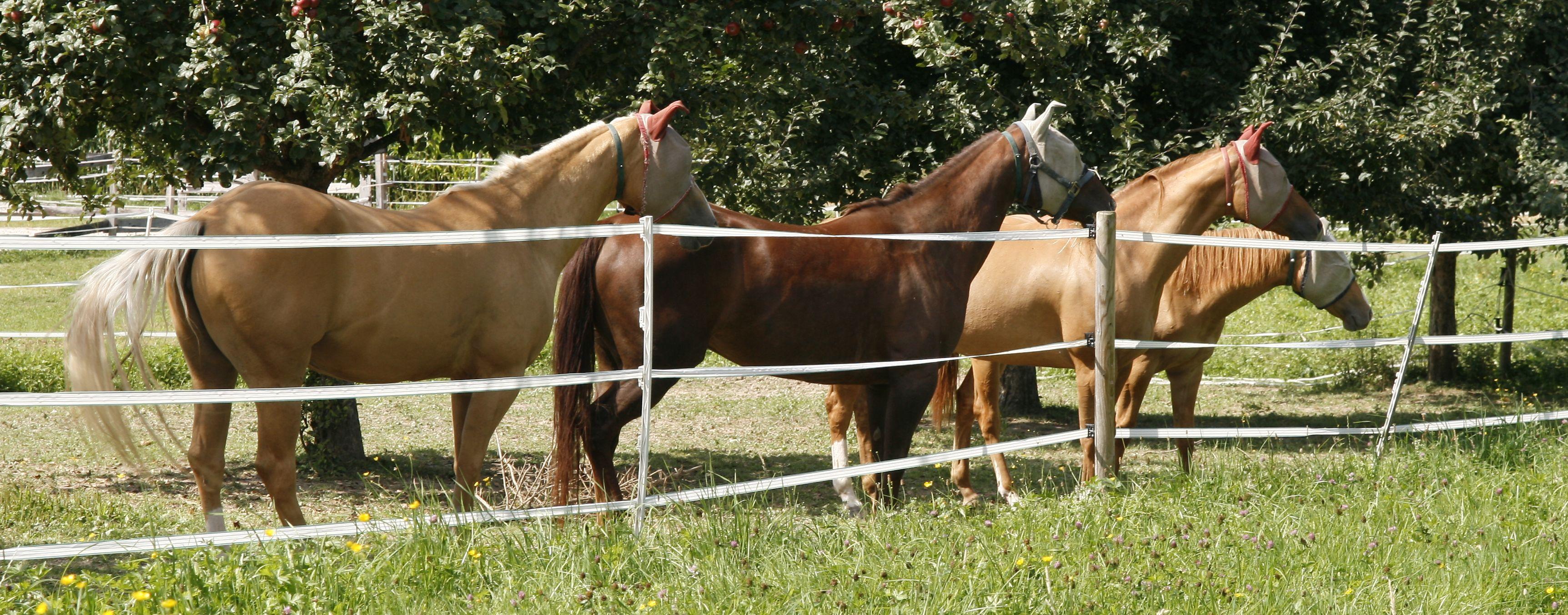 Bei uns fühlen sich Pferde wohl!