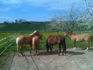LAG Stall artgerechte Pferdehaltung