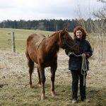 Andreas erstes Pferd